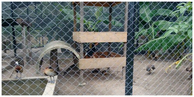 zoologico teresina 1