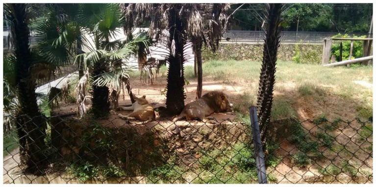 zoologico teresina 6