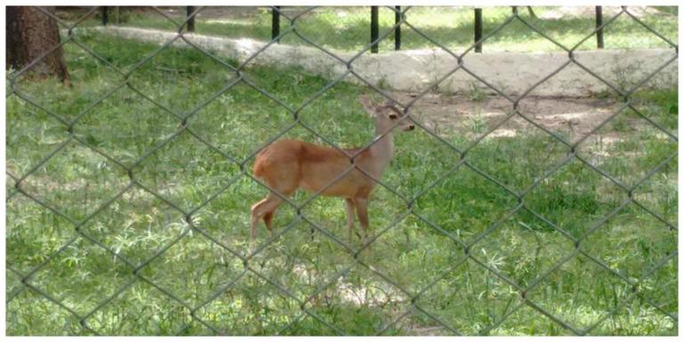 zoologico teresina 7